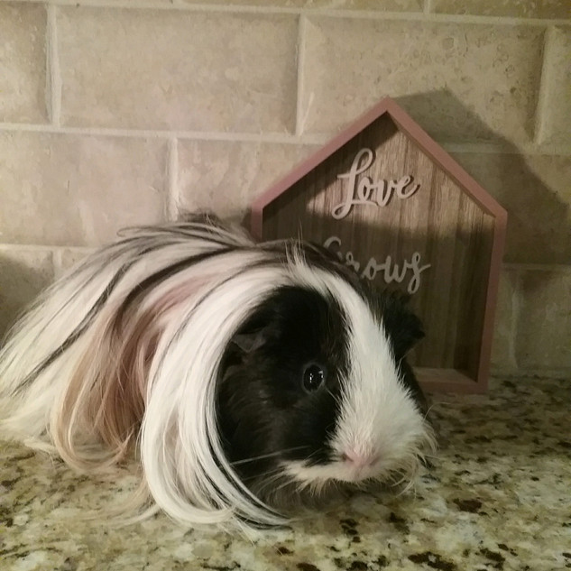 Guinevere-ADOPTED
