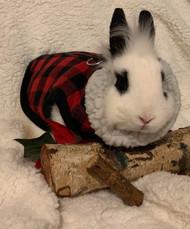 Lumber Jack Bunny?
