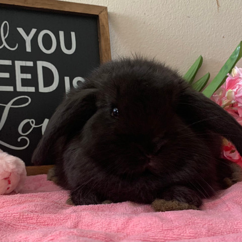 Fuzzy Lop of Love