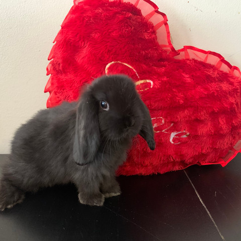 Majestic Bunny