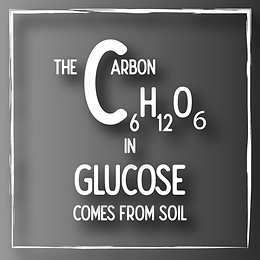 The Carbon in Glucose comes from Soil