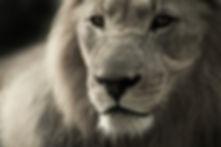 animal-animal-world-black-and-white-4019