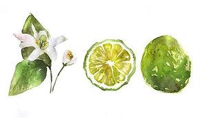 bergamot-blossom-flower-watercolor-backg