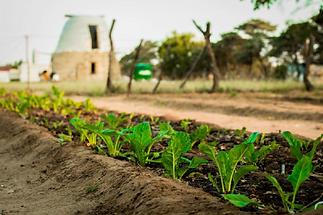 SRV Sustainable Development Bio-Veganic