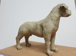 Doggo (5)