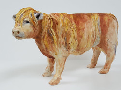 Highland Cows (13)