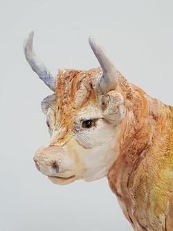 Highland Cows (4)
