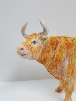 Highland Cows (7)
