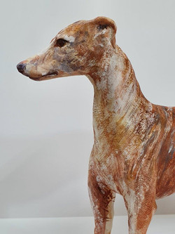 Whippet Red1 (5)
