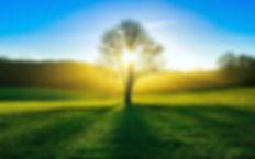 Tree-Shadow-on-field-in-sunlights-1920x1