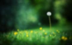 36566002-grass-wallpaper.jpeg