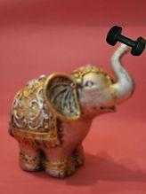 Ginástica cerebral leva a uma memória de elefante