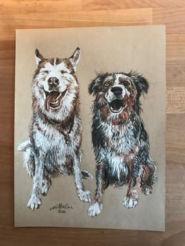 Husky + Aussie