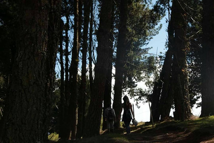 Forest in Cuicocha
