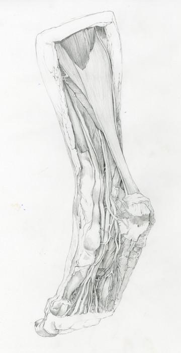 2 Ankle.jpg