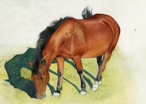 Paula's pony J.jpg