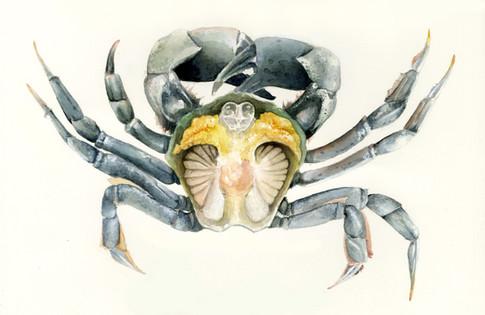 final crab 2.jpg