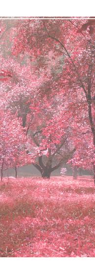 4x6 - Thom Yorke - Dawn Chorus(image).jp