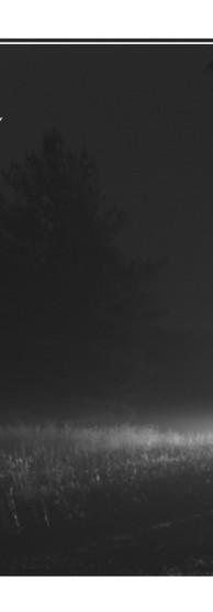 4x6 - Goldfrapp - Jo (image).jpg