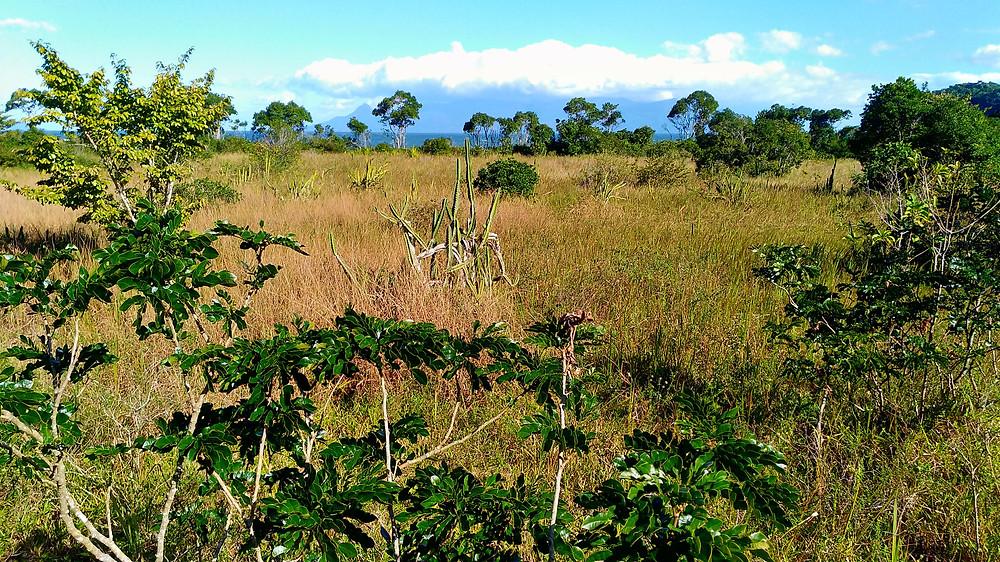 trekking ubatuba
