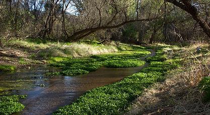 patagonia-sonoita-creek preserve.jpg