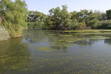 Sweetwater Wetlands Park COT.jpg