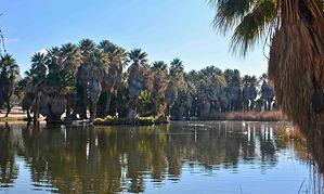 Agua Caliente Park.jpg