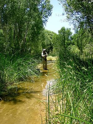 Cienega Creek Preserve-birding.jpg