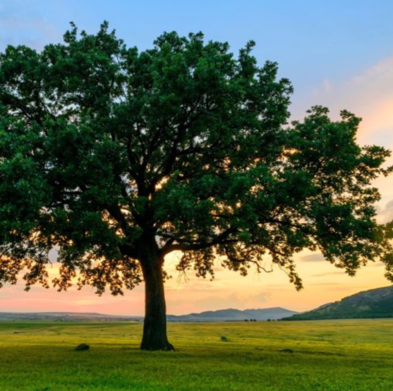 Tree Prayer Ritual