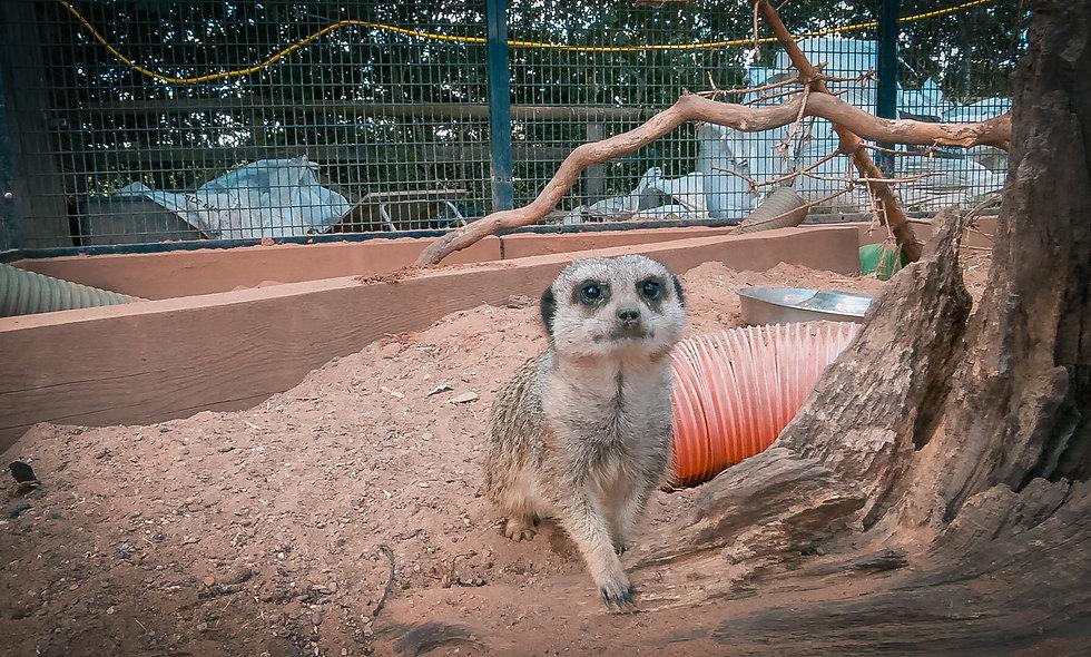 Meerkat Experience Voucher