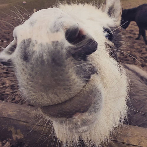 Combined Alpaca and Donkey Voucher