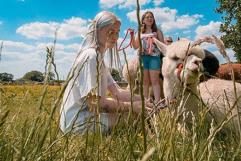Combined Alpaca , Meerkat and Donkey Experience Voucher