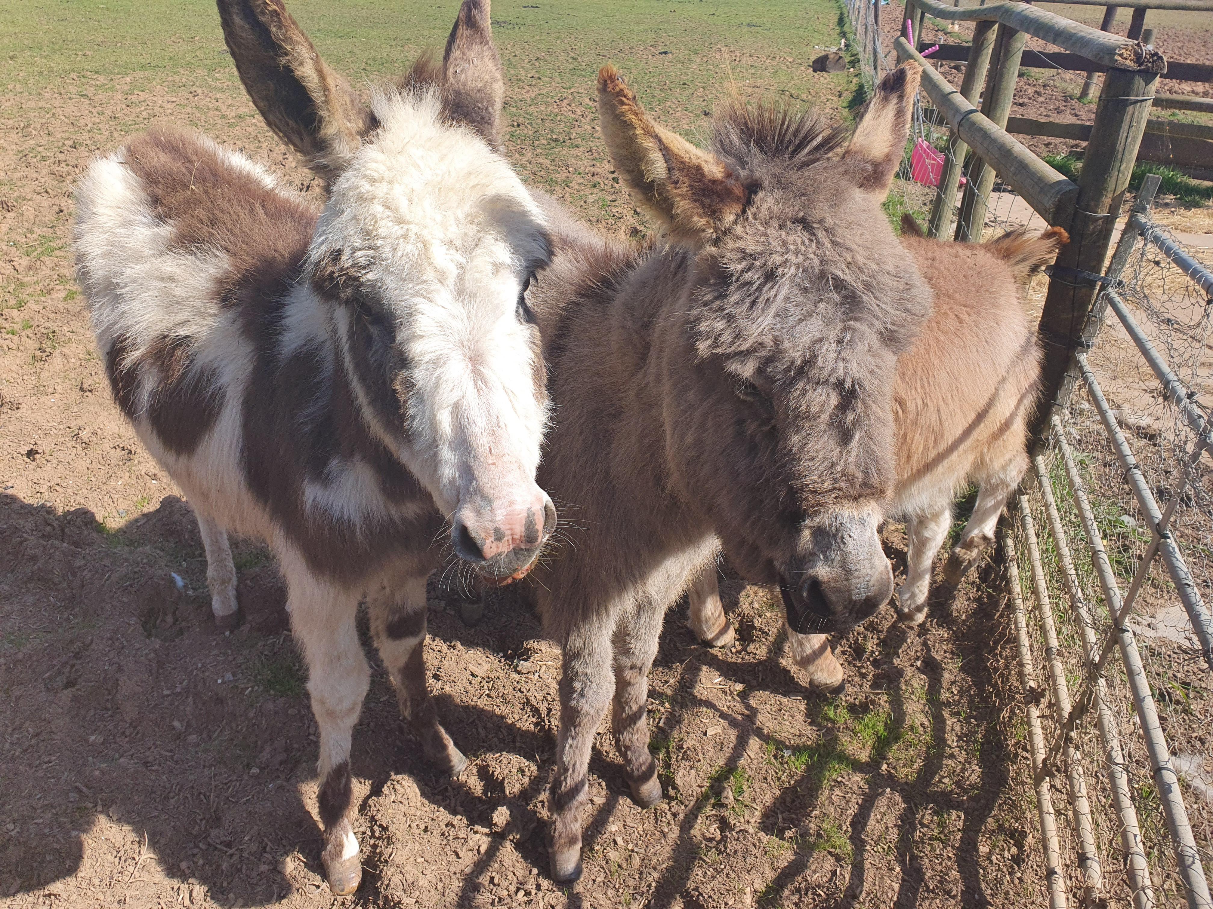 Donkey Expirience