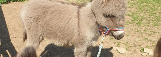 Donkey Experience Voucher