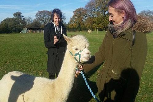 Alpaca Experience Voucher