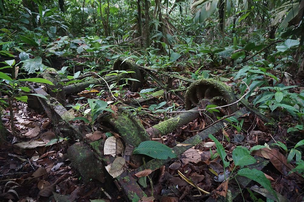Verrostete Überreste eines Minenwagens