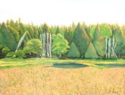 Weborg Marsh