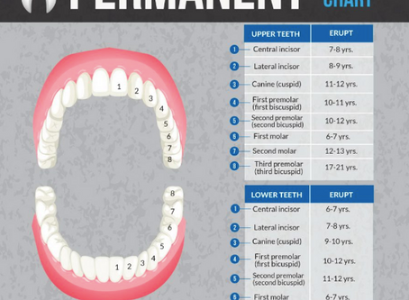 What Every Parent Needs To Know About Permanent Teeth.