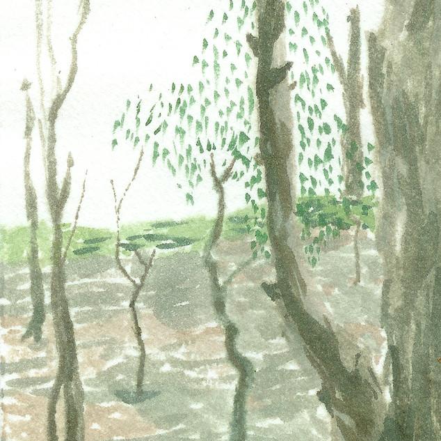 Echuca Murray River 2007
