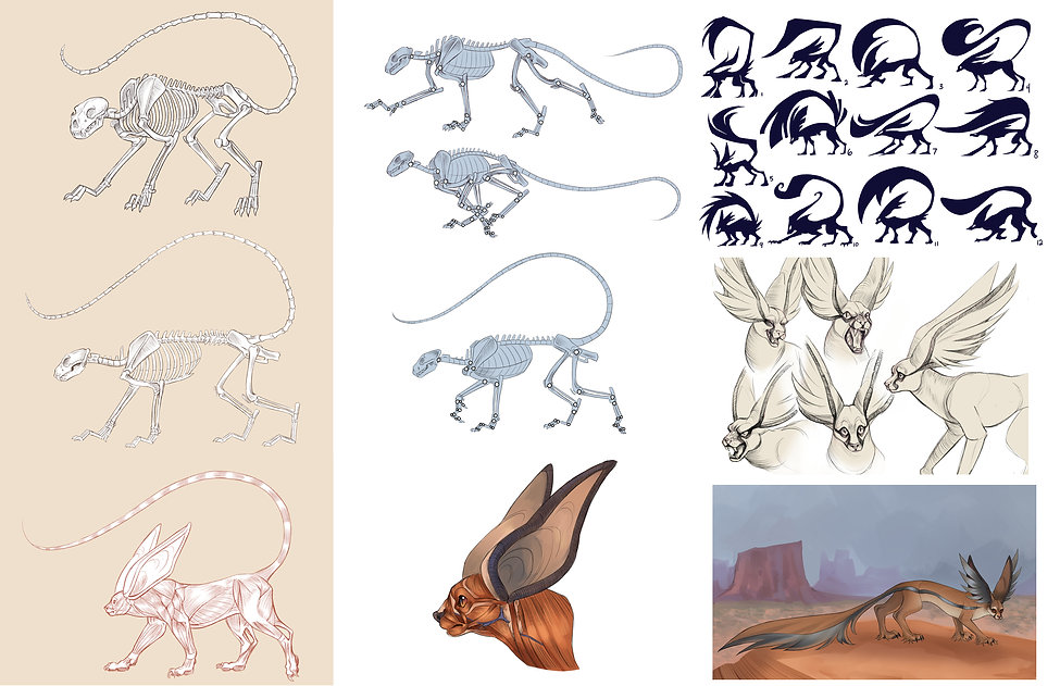 animal anatomy concept .jpg