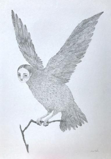 Harpy V