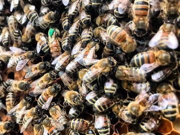 BEES AND REFUGEES - MAKING A BUZZ TOGETHER