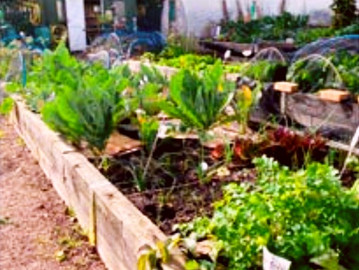 SUFRA COMMUNITY GARDENS - HOME GROWN FOR COMMUNITY MEALS