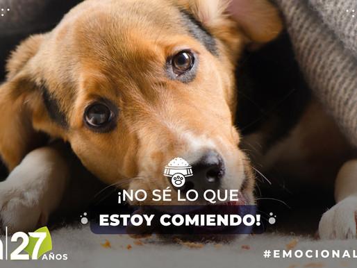 Los trastornos alimenticios en nuestras mascotas                  ¡No son un juego!