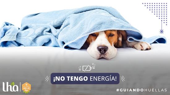 Moquillo: Enfermedad que afecta a los cachorros