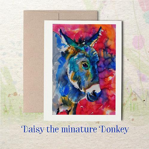 Daisy the miniature Donkey