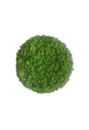 Islandmoosbild rahmenlos Grasgrün