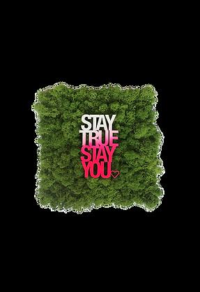 """Islandmoosbild """"Stay true"""" 30x30  Grasgrün"""