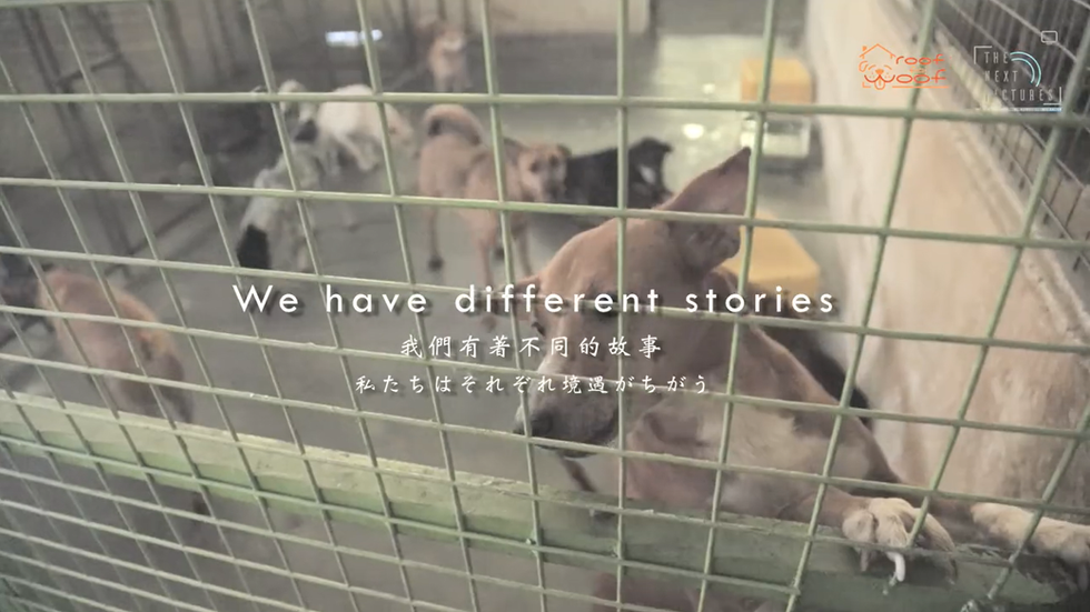 Roof for Woof- Charity Awareness Promotional Video