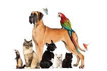 pets hcc website pic.jpg